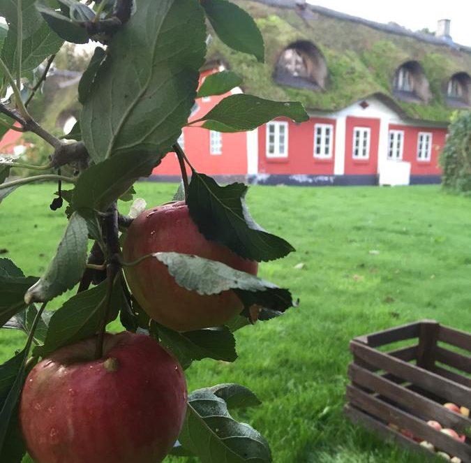 alsbrogaard,æble